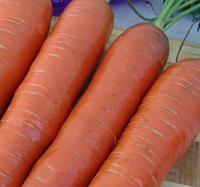 КОРТИНА F1 - семена моркови, 50 000 семян, Moravoseed, фото 1