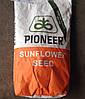 Гибрид подсолнечника Пионер П64ЛE19 ЭкспрессСан™ (Pioneer P64LE19)