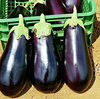 Семена баклажана Классик F1, Clause 5 грамм | профессиональные