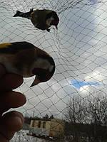 Сетка для птиц