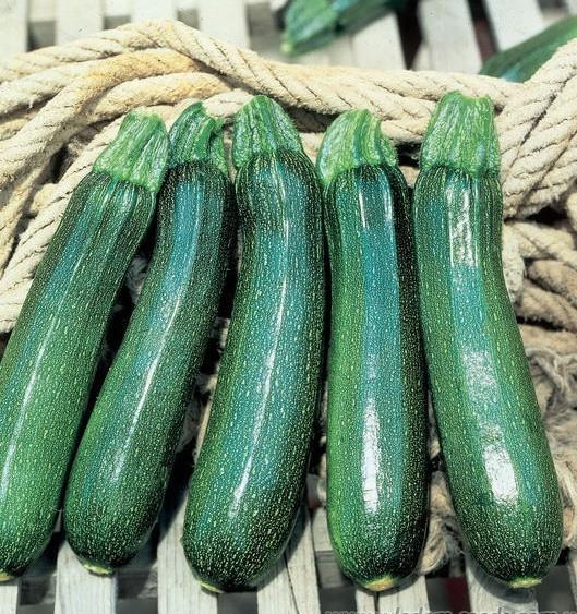 Семена кабачка Тармино F1, Clause 500 семян | профессиональные