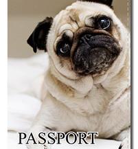 Оригинальные обложки на паспорт