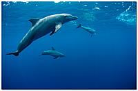 Скинали Дельфины Печать на стекле - стекло с фотопечатью