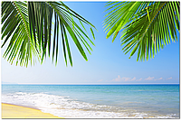 Скинали Море Пальмы на стекле - стекло с фотопечатью