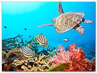 Скинали Черепаха - Стеклянная панель