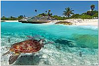 Черепаха скинали - стекло с фотопечатью