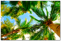 Акриловый потолок - Листья пальмы Потолок