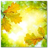 Подвесной потолок - Акриловый потолок Листья