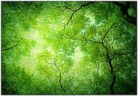 Подвесной потолок - Акриловый потолок Листья, Ветки деревьев