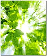Подвесной потолок - акриловый потолок Листья Солнце
