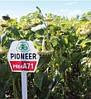 Гибриды подсолнечника (подсолнуха, соняшника) пионер пр64е71 (EXPRESS) (Pioneer PR64E71)