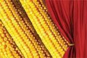 Семена кукурузы «СИНГЕНТА» FURIO  ФУРИО ФАО 350