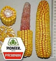 Семена кукурузы ПИОНЕР PIONEER ПР38Н86 / PR38N86 (новий) ФАО 320 , фото 1