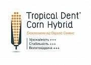 Семена кукурузы ES CUBUS\ ЕС КУБУС ФАО 310 EVRALIS SIMENCES/ЕВРАЛИС СИМЕНС