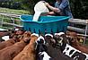 Заменитель молока для телят c 12-го дня с добавлением льна (мука семени льна), фото 3