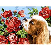 Раскраска по номерам Турбо Кокер спаниэль и розы  30 х 40 см