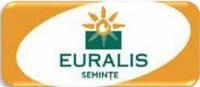Семена кукурузы ЕС Кубус