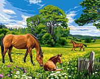 Рисование по номерам Турбо Солнечный луг  30 х 40 см