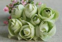 Камелия салатовая
