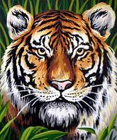 Тигр. Канва с рисунком