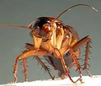 Уничтожение тараканов. Николаев.