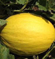 Среднепоздний гибрид дыни Для хранения Бабор F1  очень урожайный, профессиональные семена  Clause 1 000 семян