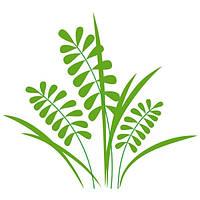 Виниловая Наклейка Glozis на прозрачной основе Herb 50х50 см