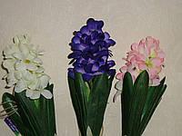 Гиацинт маленький фиолет