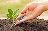 Избыток удобрений не может компенсировать недостаток знаний. Как правильно вносить удобрения.