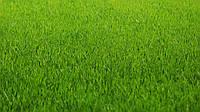 Смесь газонной травы универсальной