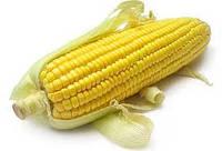 Насіння кукурудзи СІ Респект ФАО 240 (Syngenta)