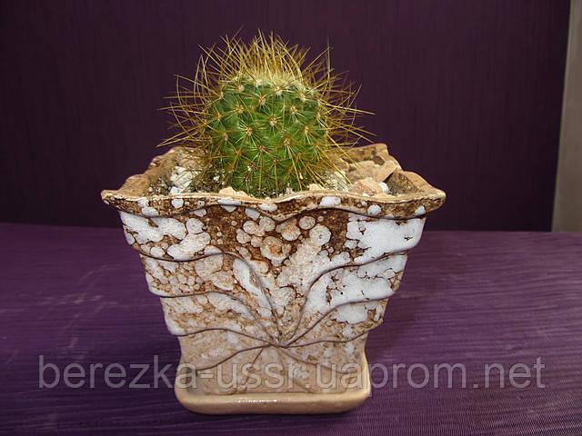 Кактусы микс в керамике