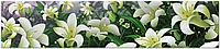 Стеклянный фартук для кухни - скинали Лилии Цветы