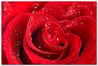 Стеклянный фартук для кухни - скинали Роза