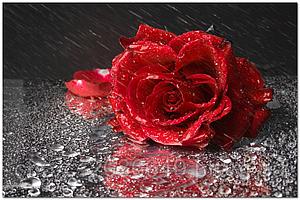 Стеклянный фартук для кухни - скинали Роза Капли
