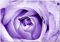 Стеклянный фартук для кухни - скинали Роза Фиолетовая