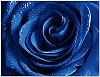 Стеклянный фартук для кухни - скинали Роза Синяя