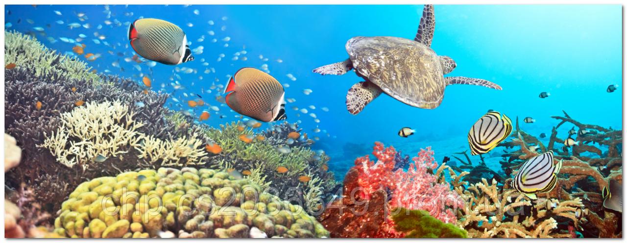 Стеклянный фартук для кухни - скинали Рыбы черепаха