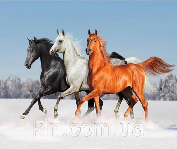Алмазная вышивка Тройка лошадей KLN 30 х 25 см (арт. FS086) полная выкладка