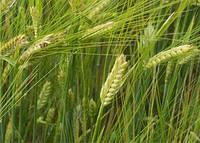 Органические  удобрения -