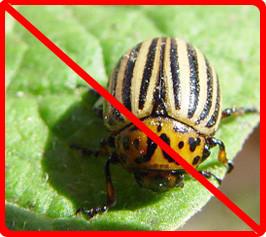 Обзор инсектицидов для защиты растений