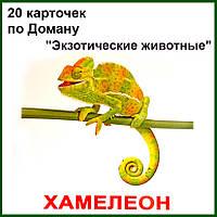 """""""Экзотические животные"""" с фактами"""