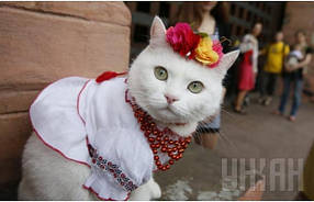 Вышиванки для собак и кошек