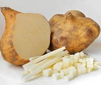 ХИКАМА - МЕКСИКАНСКИЙ КАРТОФЕЛЬ (Jicama pachyrhizus erosus, Yam Bean, Mexican Potato), фото 1