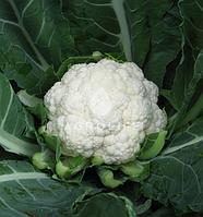 Семена цветной капусты Немо F1, Clause 1 000 семян | профессиональные, фото 1