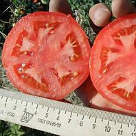 БАГИРА  F1 - семена томата, CLAUSE