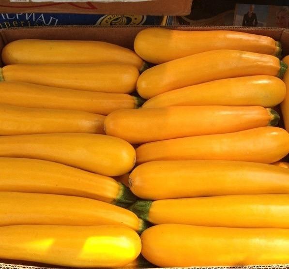 Семена желтого кабачка-цуккини для открытого грунта гибрид Санлайт F1 Clause, большая проф упаковка 1000 семян