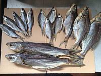 Рыба вяленая  речная; плотва, густера, лещ, судак, , чехонь,