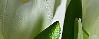 Плитка Атем Ялта настенная облицовочная Atem Yalta Tulip Maxi 1 W 200х500 белый