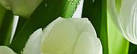 Плитка Атем Ялта настенная облицовочная Atem Yalta Tulip Maxi 3 W 200х500 белый